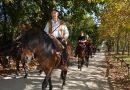 """""""Passo"""" do garrano travado em inventário da Equitação `Portuguesa"""